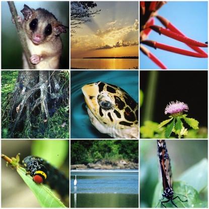 Afinal, qual é o valor da biodiversidade?