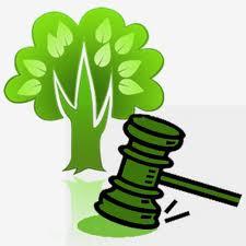 Entenda as condições para os municípios realizarem o Licenciamento Ambiental