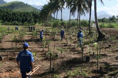 Cariocas podem acompanhar evolução de áreas reflorestadas no estado