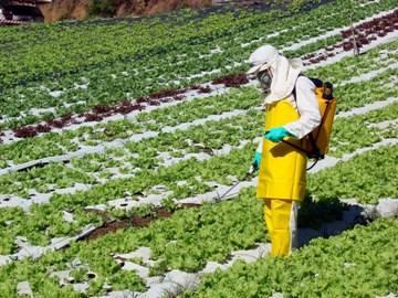 Relatório indica alimentos com mais agrotóxicos no Paraná