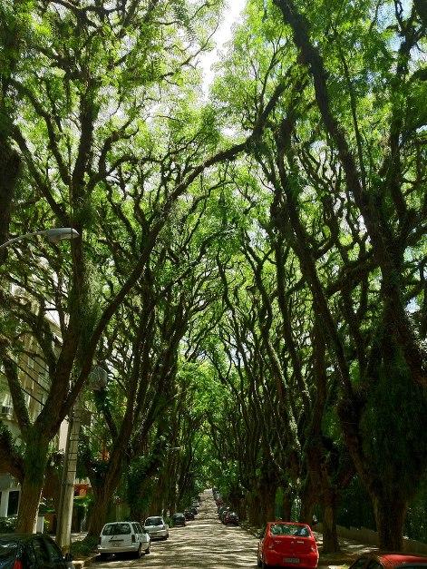 Você conhece as árvores da sua região?