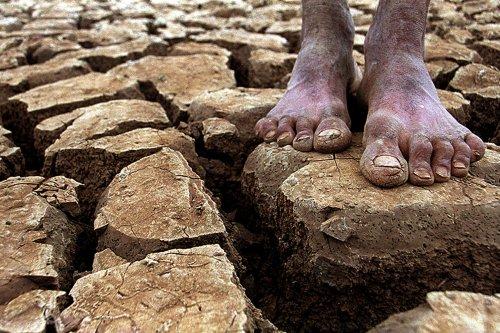 Quais são os efeitos da Mudança do Clima no Brasil?