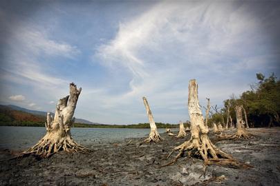 Área equivalente a do Brasil pode estar degradada até 2050, alerta Pnuma