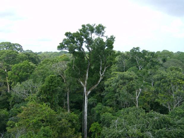 Nasa conclui que Amazônia absorve mais gás carbônico do que emite