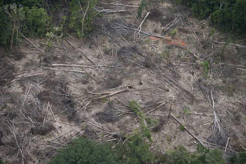 noticia-desmatamento2