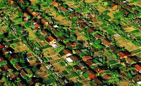 Em bairro suíço, moradores plantam o próprio alimento e compartilham com os vizinhos