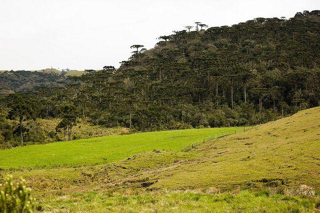noticia-bioma-mata-araucaria-tiago-padua-de-flickr