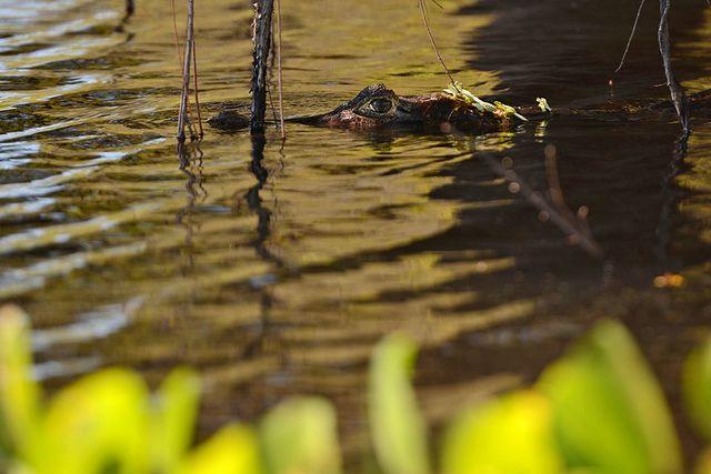 noticia-bioma-pantanal-ggallice-de-flickr