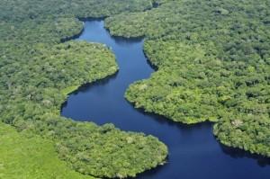 Conheça os biomas brasileiros