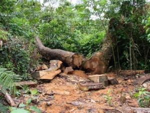 Dado de desmatamento na Mata Atlântica revela crescimento
