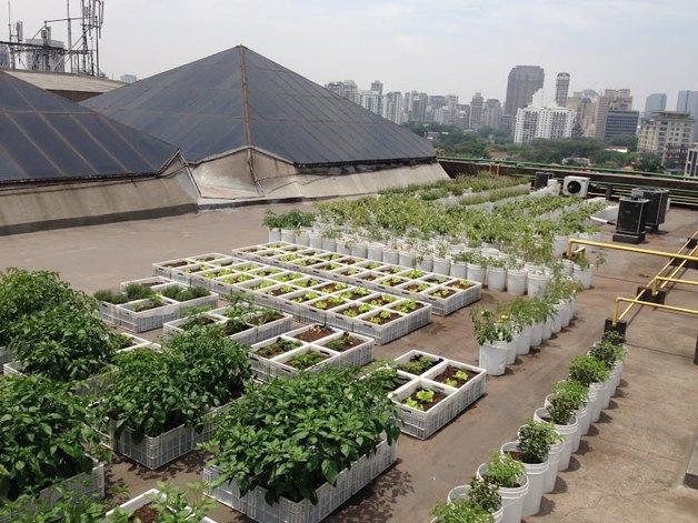 Shopping de SP inova ao criar telhado com composteira e horta