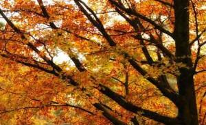 Manejo inadequado contribui para queda de árvores